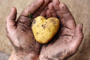 Landwirtschaftliche Betriebshilfe